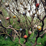 Image: This color photograph depicts a large tree emanating from a thicket of bushes and ivy. It's springtime so the branches of the tree are still bare which stands in contrast to the lush vegetation that surrounds it. Instead of leaves the branches contain around 20 soccer balls of different colors and ages. The balls make the tree look festive but also sad, a testament to the lost playthings of early youth.