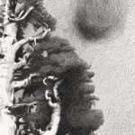Graphite blurred drawing from a photograph of a giant sequoia tree