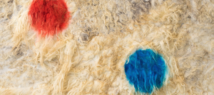 Large hand-felted raw wool canvas with two circles painted using animal branding fluid in red and blue